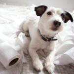 Il mio cane sporca in casa!
