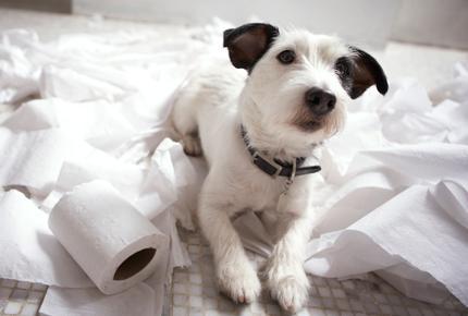 Il Mio Cane Sporca In Casa Ente Nazionale Protezione Animali