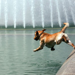 Come proteggere i pet dalle alte temperature