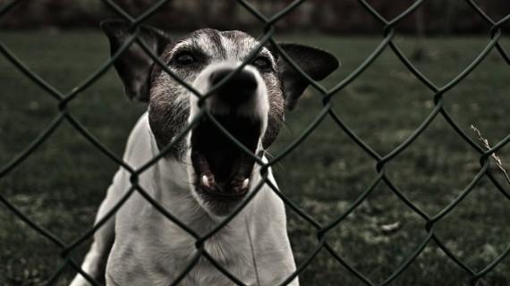 cane-che-abbaia