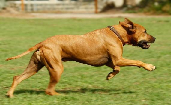 cane_corre_parco_giochi