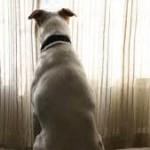 A casa da solo: un cane annoiato?
