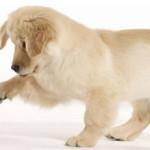 Come imparano i cani