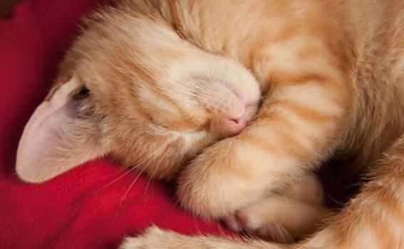 gatto-dorme1