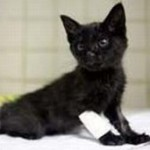 Gatto lanciato da auto e Pitone recuperato
