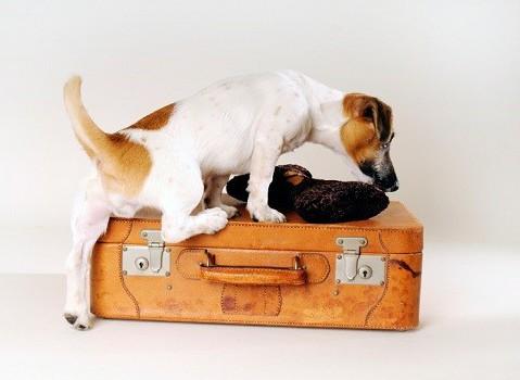 Con-il-cane-in-vacanza