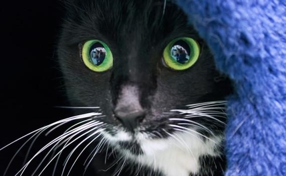 Gatti-notte