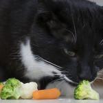 L'alimentazione dei gatti