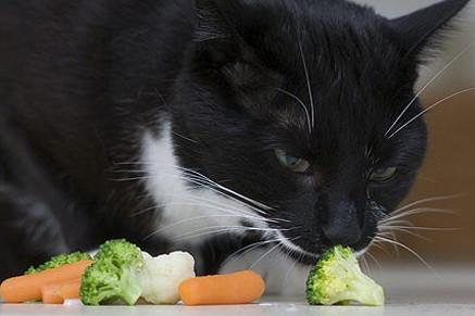 gatto-che-mangia