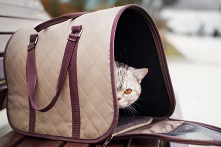 gatto-viaggio