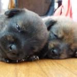 Due cagnolini salvi grazie all'ENPA