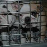 Indagine delle Guardie Zoofile ENPA di Milano rinviate a giudizio 9 persone