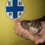 Consegnato all'ENPA di Milano gattino salvato dal compattatore dell'AMSA