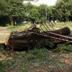 Il Comune approva l'abbattimento di alberi durante la stagione della nidificazione per fare spazio al tendone di X-Factor.