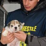 Traffico di cuccioli dall'Est, due sequestri in una settimana. Appello ENPA: non alimentiamo la domanda