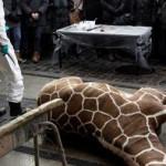 La conservazione di una specie pura in cattività: la più grossa bugia sul rispetto degli animali