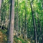 """Nuova legge sulle foreste, un provvedimento """"naturicida"""""""