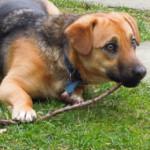 Cani avvelenati al Parco Sempione: notizia infondata