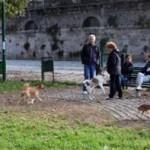 Cani avvelenati al Parco Sempione: in realtà sono morti per il caldo