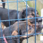 Guardie Zoofile ENPA Milano sequestrano due cani a Tribiano