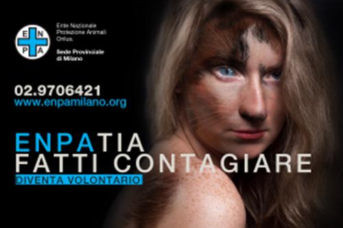 Gattino viaggia nel vano motore per circa 10 km: illeso, soccorso da ENPA Milano, sta bene.