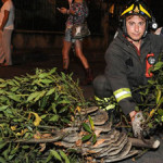 Si cerca il proprietario del pitone reale recuperato dai Vigili del fuoco e consegnato a ENPA Milano