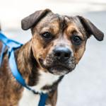 Lorenzin: divieto d'ingresso cani a EXPO è anacronistico