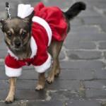 Si suicida dopo la morte dei cani: ENPA Milano vicina ai suoi cari