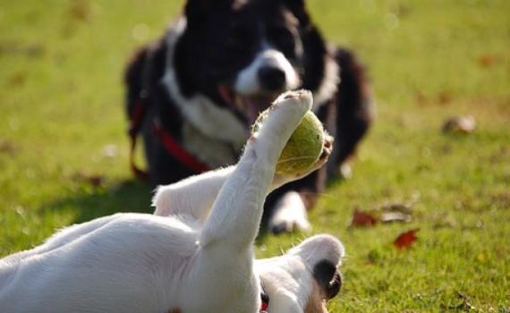 cani-che-giocano