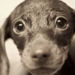 Ermanno Giudici partecipa a inchiesta televisiva sul traffico di cuccioli dall'Est