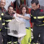 Gattino nel motore salvato da ENPA Milano insieme ai Vigili del Fuoco