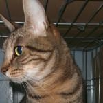 Il gatto ritrova il suo padrone dopo l'allagamento del canile comunale. Le Guardie Zoofile ENPA Milano denunciano i responsabili di due maltrattamenti