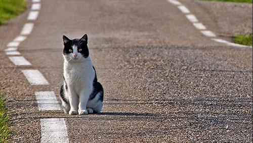 gatto_smarito