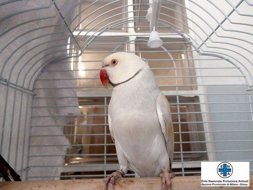 pappagallo3_web