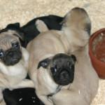 A 6 anni dall'inizio delle indagini per traffico di cuccioli dall'Est Europa, ENPA Milano delusa dalle condanne
