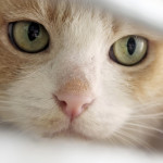Scegli di adottare a distanza uno dei nostri animali