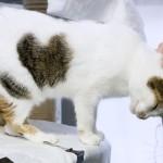 Considerazioni da fare prima di adottare un gatto