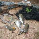 Nuova legge per reati ambientali non inasprisce pene per bracconaggio locale