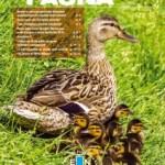 """Scarica """"Fauna"""", il periodico di ENPA Milano – Edizione giugno 2015"""