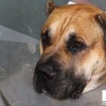 ENPA Milano recupera un gatto in un cofano e sequestra cane in fin di vita per colpo di calore