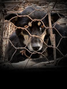 dogs-bao