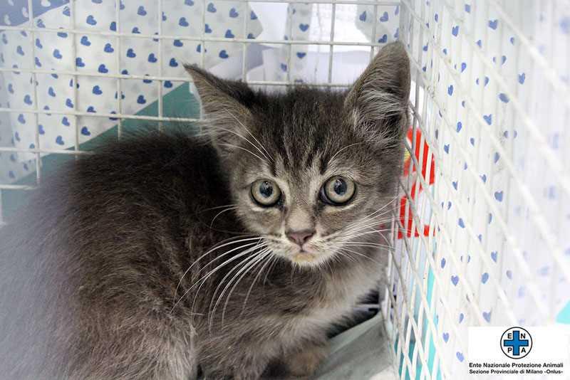 gattino-16