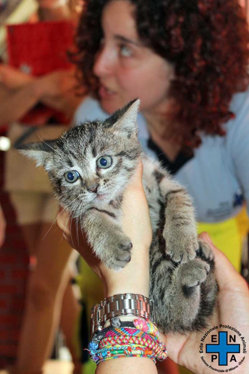 gattino-2