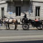 Uber e l'indifferenza verso il rispetto dei diritti degli animali