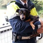 ENPA Milano chiede maggiore attenzione da Forze di Polizia contro maltrattamento animali