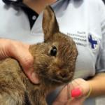 Coniglio femmina estratto da auto in Via Porpora a Milano