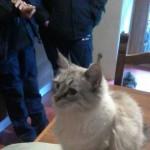 Guardie Zoofile ENPA Milano scoprono un caso di accumulo compulsivo animali