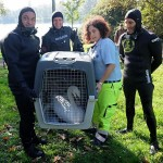 Giovane cigno in giardino condominiale soccorso da ENPA Milano