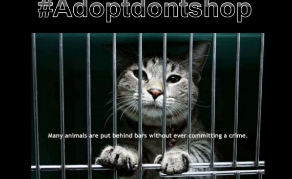 adopt-dont-shop-marketing-campaign-for-the-humane-society-3-638