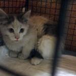 ENPA Milano e VVFF estraggono un gattino dal muro